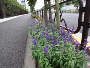 富士フレーバー 街路