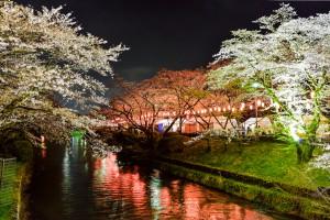 岸 光春 最優秀賞  紅白の夜桜