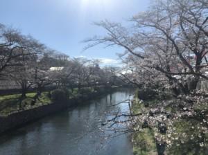 20190401sakura1