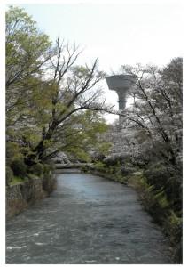 入選「羽村の水と桜」瀧澤美知子
