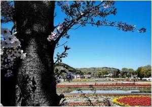 入選「羽村、春の共演」並木裕
