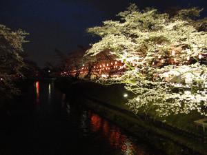 4-2桜ライトアップ