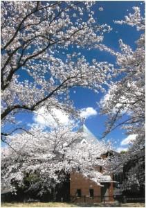 入選「春満開」志村伸