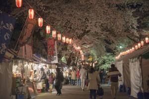 優秀賞 石原義信 夜桜ロード
