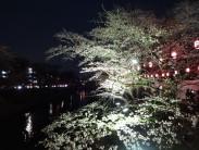 夜桜 4.6