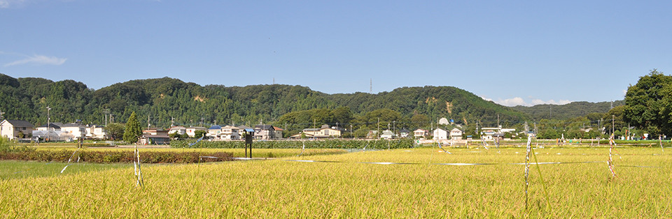 羽村市観光協会