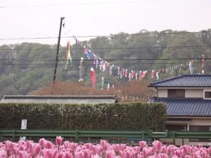 2014.4.19こいのぼり飾り
